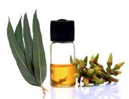 Resultado de imagen para aceite esencial de eucalipto